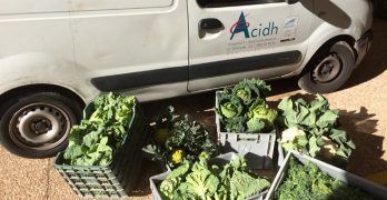 La FMA dóna al Banc dels Aliments hortalisses de temporada cultivades al Parc Natural del Garraf