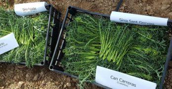 Resultats i xifres de la Fase I del projecte de dinamització agrícola del Parc del Garraf